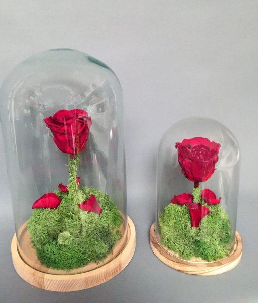 donde comprar la flor de la bella y la bestia