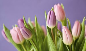 Precioso ramo de tulipanes para comprar online en Madrid