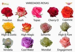http://efimeras.es/wp-content/uploads/2017/08/rosas.jpg