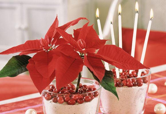 centros de mesa con flores de pascua y decoración con flores en navidad