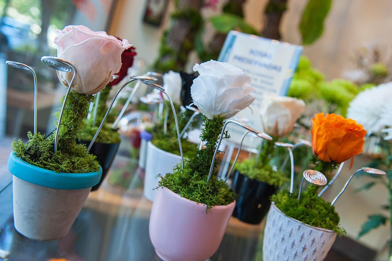 Comprar flores preservadas en Madrid