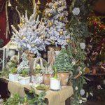 Ideas para decorar con flores y plantas en navidad